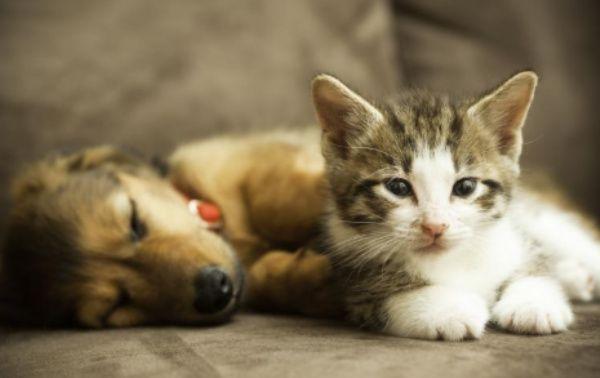 negocios relacionados con mascotas