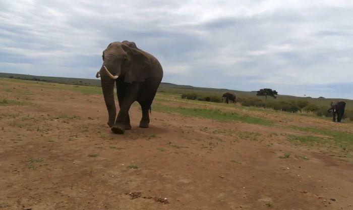 Metáfora del elefante que te ayudará a reflexionar